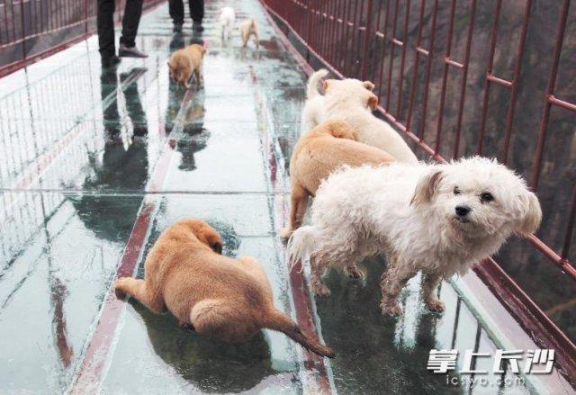 协会 养犬文化不成熟是流浪狗较多的重要原因 长沙市小动物保护协会