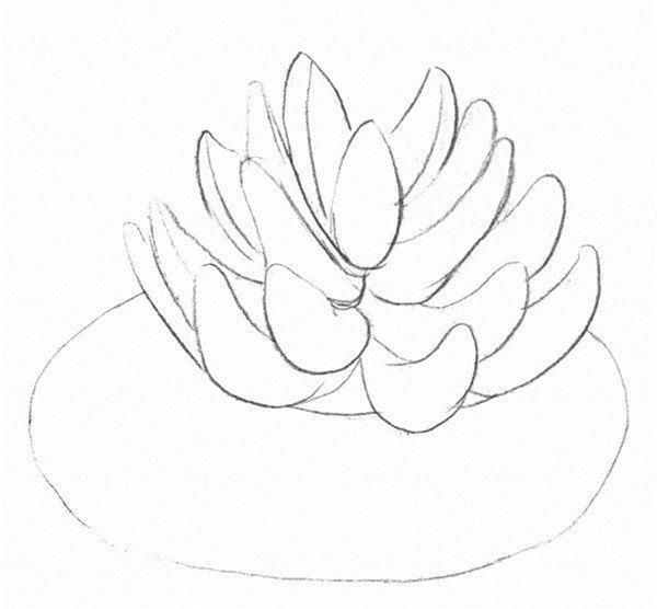 植物的绘画步骤二 3,擦除多余辅助线,画出多肉盆栽的轮廓线,线条清晰.