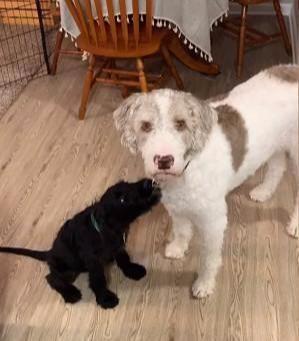 带新狗狗回家,独子狗狗用眼神质问主人,你这样做有没有问过我?