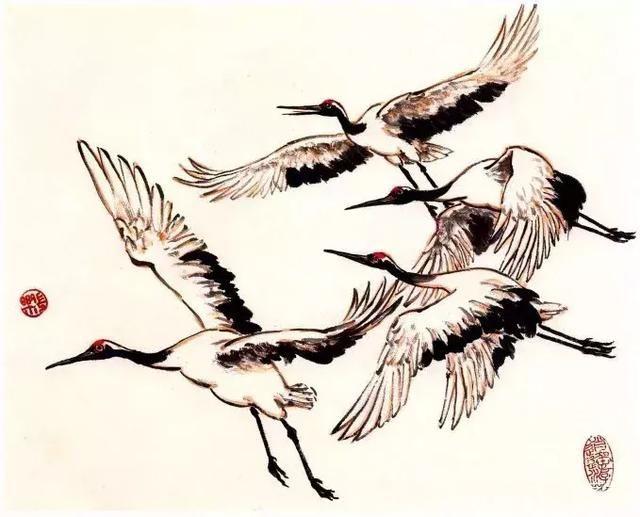 大型涉禽,身体修长,高120厘米左右。颈长、喙尖且长,足直挺细长,是谓三长。头顶有鲜红色肉冠,故称丹顶鹤。全身羽毛白色,但翅翼上的次级飞羽和三级飞羽为黑色,颊和颈的大部分为深褐色,喙灰绿色,足灰黑色。在写意画法中,不细分颜色,除丹顶,其余均以不同浓淡的墨色来表现。 丹顶鹤的结构和各部位名称  詹仁左小写意丹顶鹤的画法: 鹤头部的画法 先画喙,长且尖,注意嘴中线较上下两线为长,否则嘴就张不开了。添上鼻孔,其鼻沟较长一。再画眼睛,位置在口角的后上方,接着画出额和颊部,并画出颈部之深色部分,然后用淡墨补画出头后