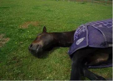 动物的睡觉方法老虎是卧着睡觉的狐狸睡觉的时候是绻着的鸡睡觉时候
