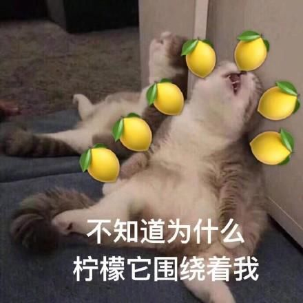 表情柠檬:真酸不单独忍表情眼泪包图片