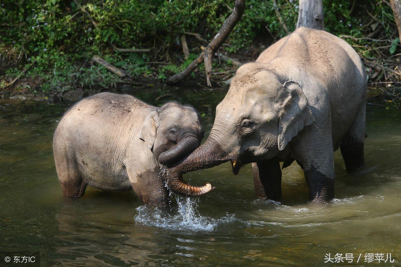 西双版纳野象谷,国家级自然保护区勐养子保护区,是中国首家以动物