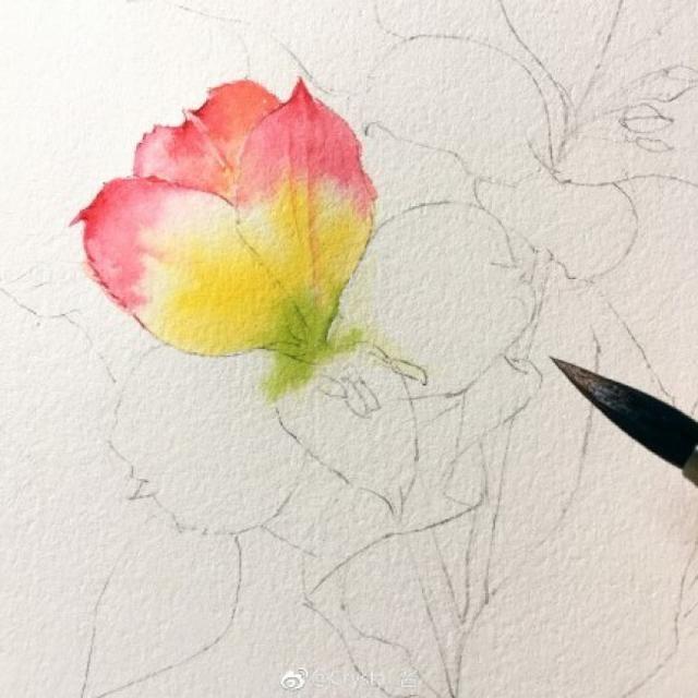 百合花水彩画步骤