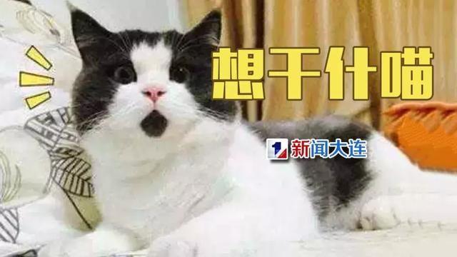 壁纸 动物 狗 狗狗 猫 猫咪 小猫 桌面 640_360