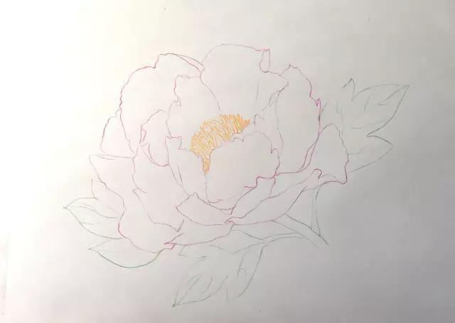 彩色铅笔画牡丹花手绘过程丨彩铅花卉图文教程