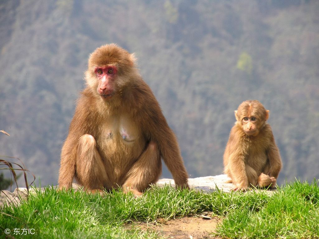 峨眉山还是多种稀有动物的栖居地,动物种类达2300多种.