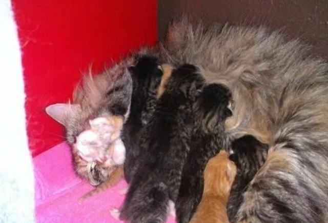 """流浪猫生下7只小猫,同居老狗帮忙照顾,却把另一只狗""""孤立""""了"""