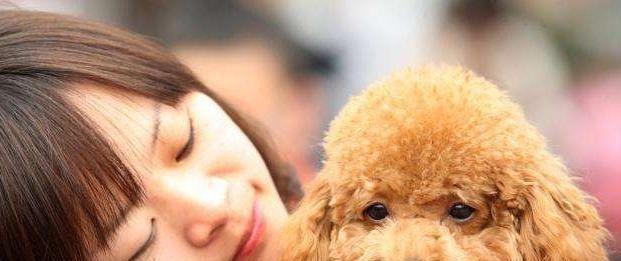 有教养的泰迪犬会有这5个表现,占2个就很欣慰,你家占几个?