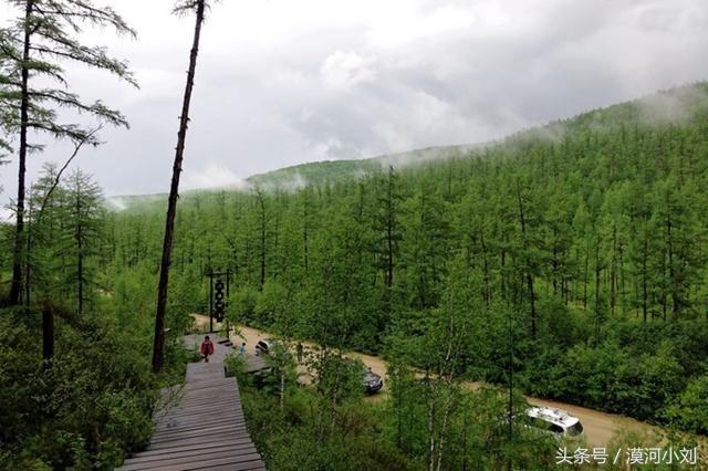 俄罗斯乌苏里森林