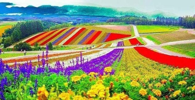 怎么用创新思维做休闲农业?