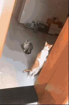 主人正在通洗手池管道,家里的猫咪全都围观过